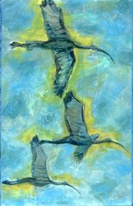 Three Ibis acrylic on Tyvek